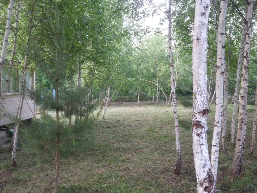Продаётся участок 19 соток, купить землю, вот какие дома продаются, где продаются дома, продается дом в деревне, купить землю с домом zapovednie.ru